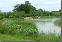 Where to Fish, Coarse fishing venues in the South East- Churchgate Lakes, Essex
