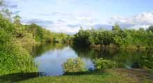 Where to Fish, Coarse fishing venues in the South East- Twynersh Fishery, Surrey
